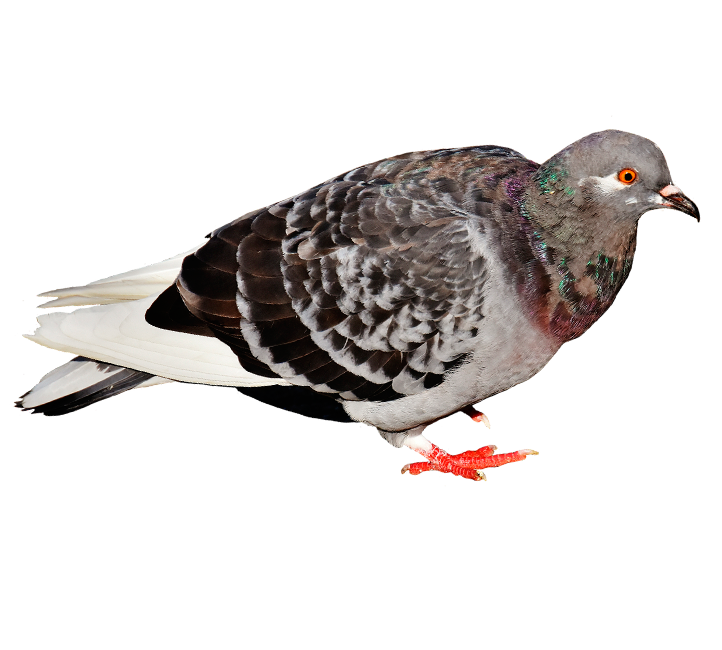 Bird Pest Control Arizona Organic