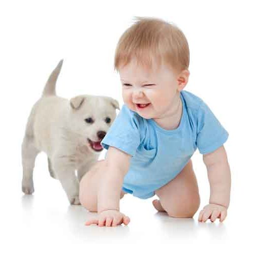 Pest control that is safe for pets and children