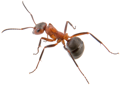 To Learn More About Ant Pest Control Contact A Arizona Organic Termite Specialist For Free Essment